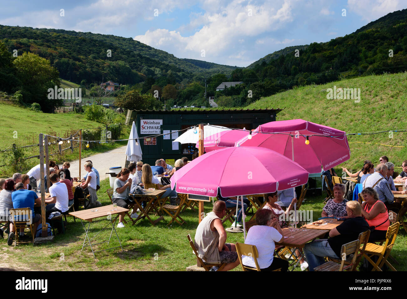 "Pfaffstätten: vineyard, bar at festival ""Genussmeile"" along 1st Vienna water line hiking path, winegrowing enterprises with own bars, visitors, Wiener Stock Photo"
