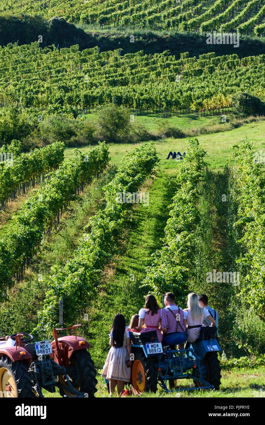 """Pfaffstätten: historical tractors at vineyard, at festival """"Genussmeile"""" along 1st Vienna water line hiking path, Wienerwald, Vienna Woods, Niederöste Stock Photo"""