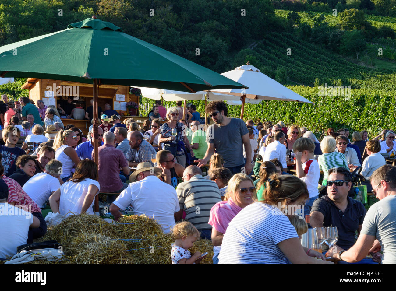 """Gumpoldskirchen: vineyard, bar at festival """"Genussmeile"""" along 1st Vienna water line hiking path, winegrowing enterprises with own bars, visitors, Wie Stock Photo"""