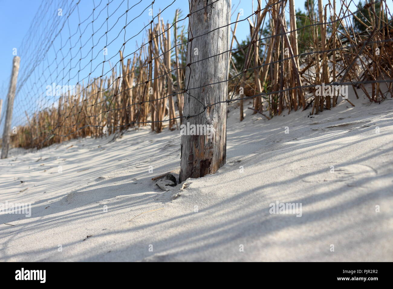 Wire fence protecting area of sand dunes and its vegetation - Stock Image