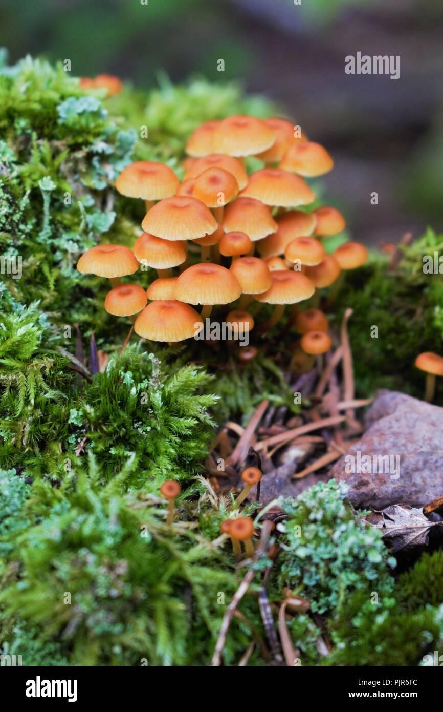 Fungi Macro Shot at the National Park - Stock Image