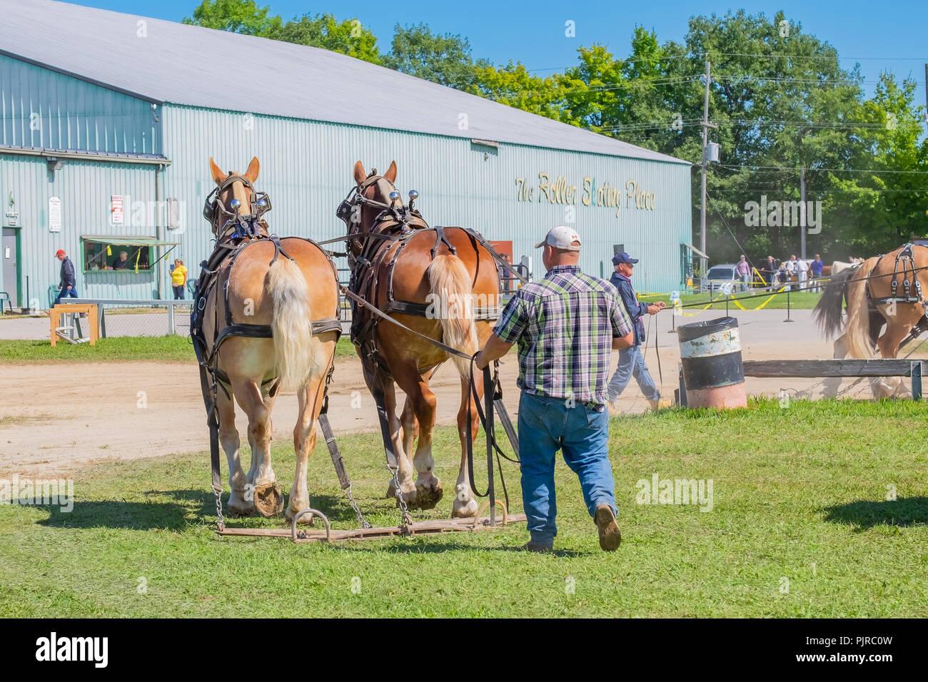 Draft Horses Stock Photos & Draft Horses Stock Images - Alamy
