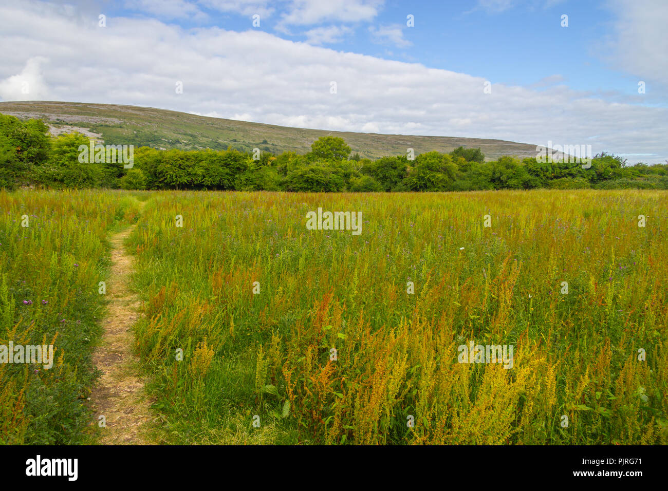 Hiking trail with Mountain and vegetation in Ballyvaughan, Ireland - Stock Image