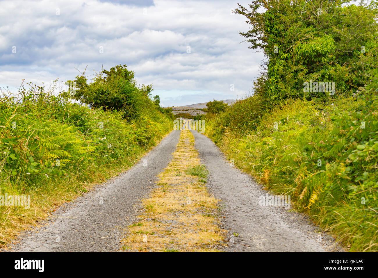 Farm road around vegetation in Ballyvaughan, Ireland - Stock Image
