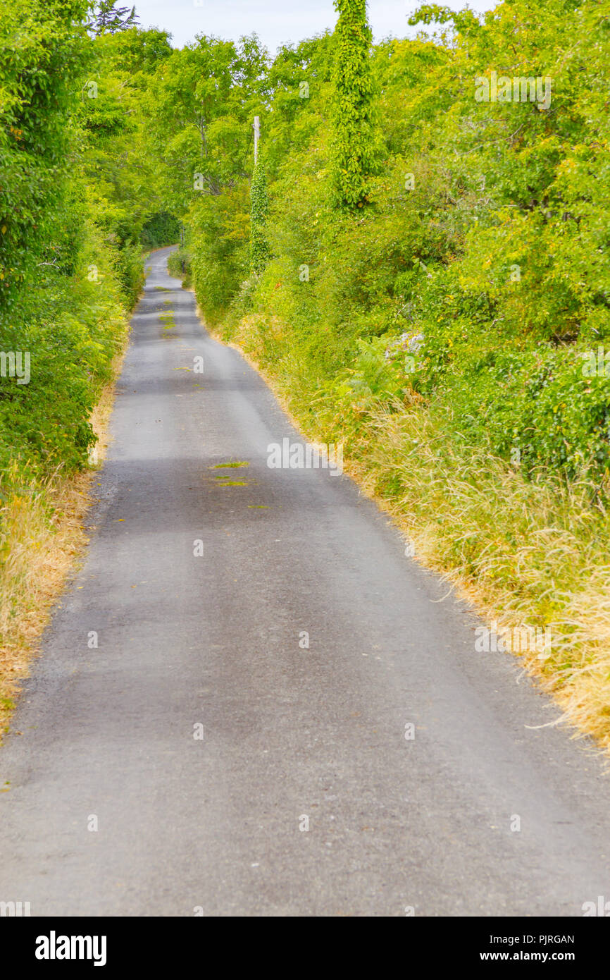 Farm road with vegetation around in Ballyvaughan, Ireland - Stock Image