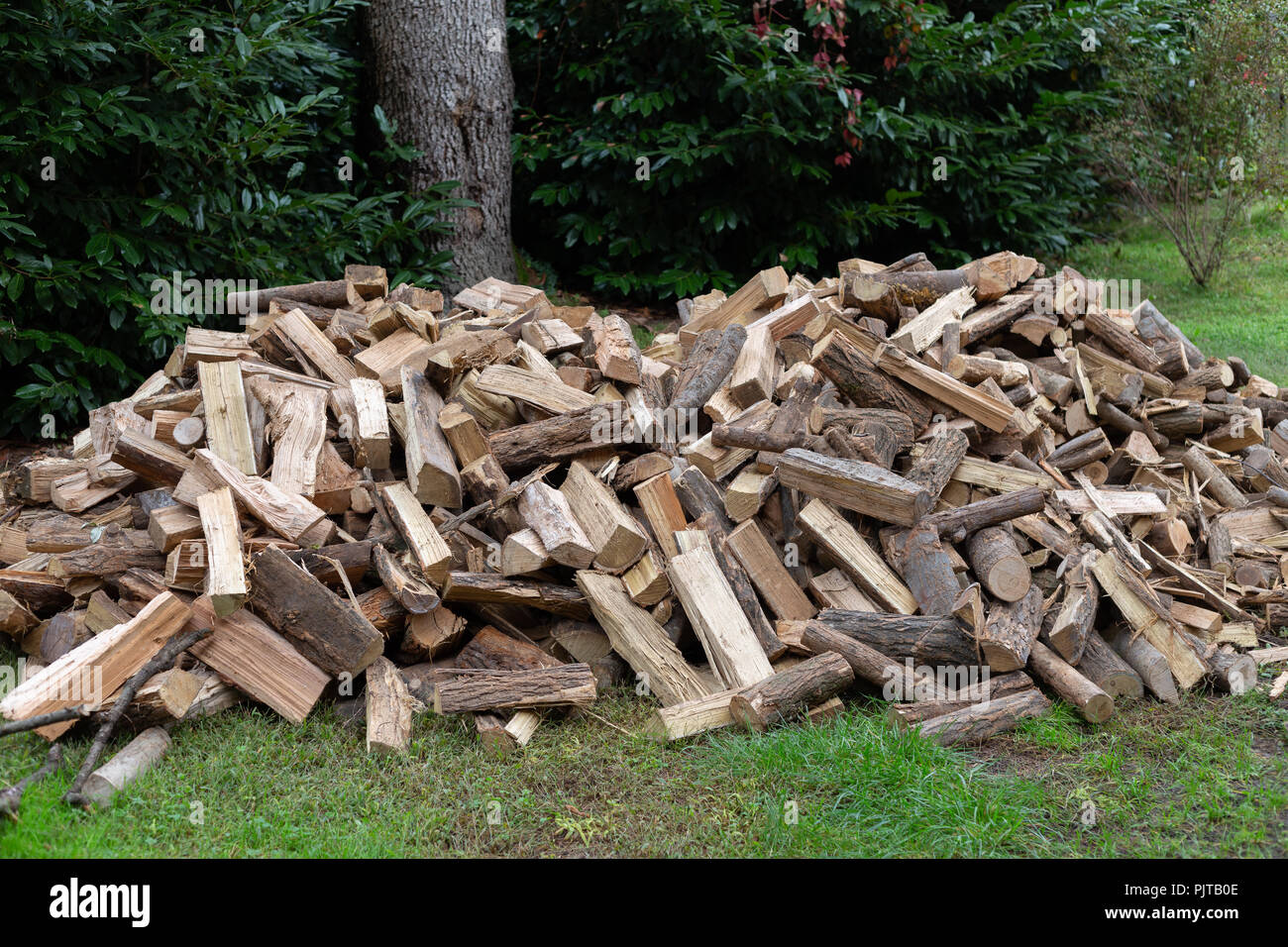 Stack of Firewood on grass - Stock Image