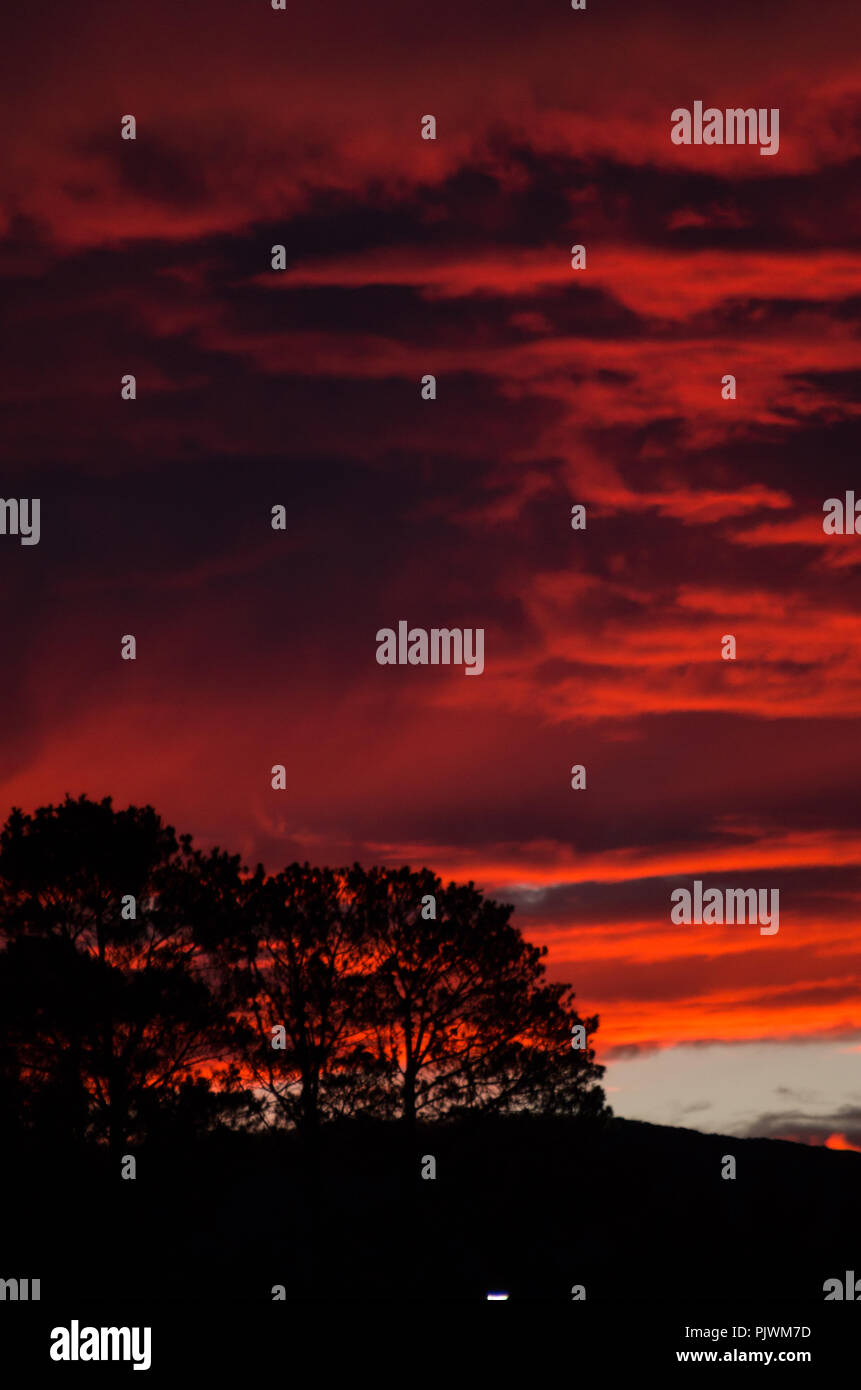 Gumtrees silhouetted against a blood red sky in the snowy mountains region, australia Stock Photo