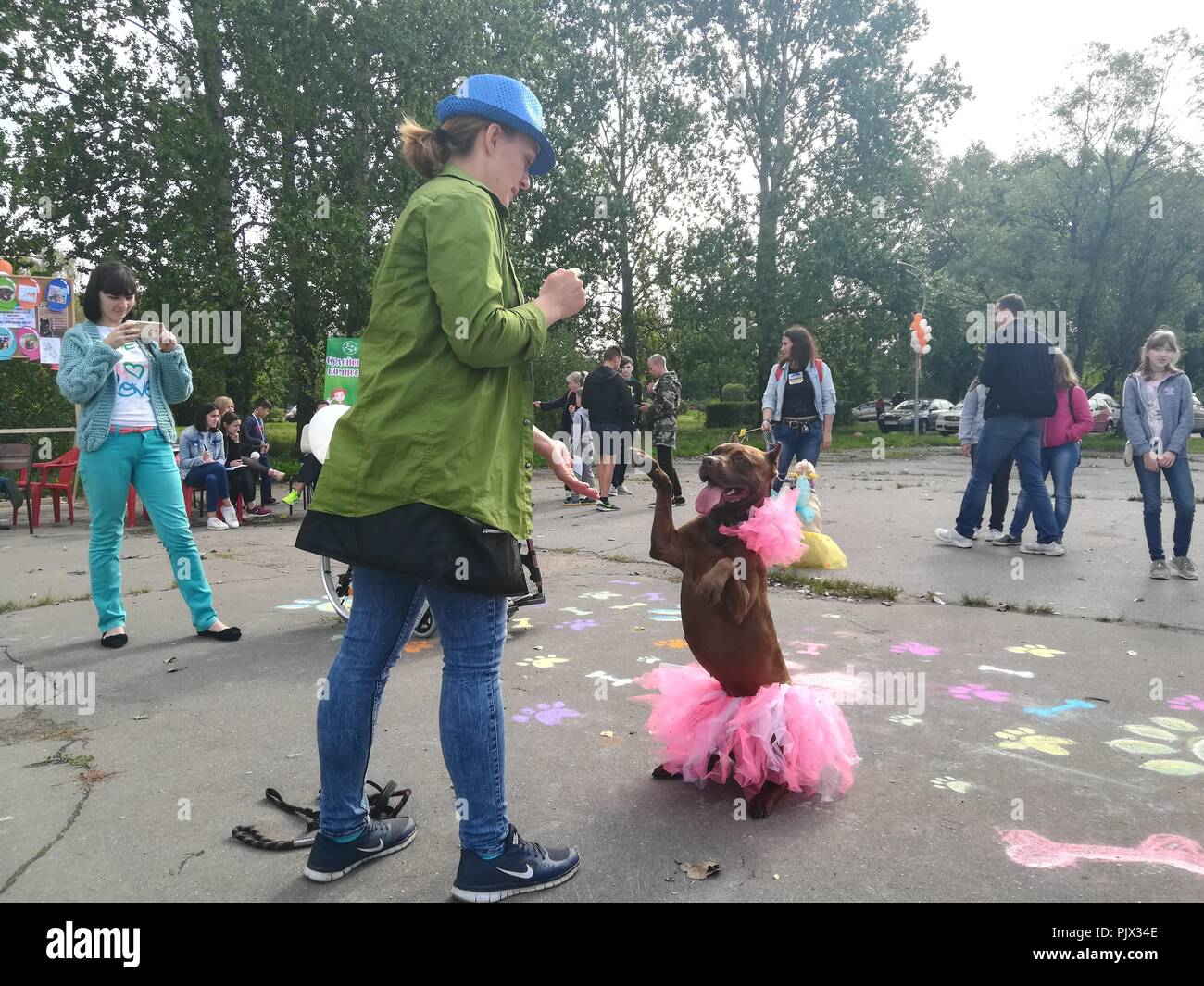 St.Petersburg, Russia. 9th September 2018. Costume Parade at the Pit Bull and Staffordshire Bull Terrier dog show in Aviators' Park at St.Petersburg, Russia Credit: Nastia M/Alamy Live News - Stock Image
