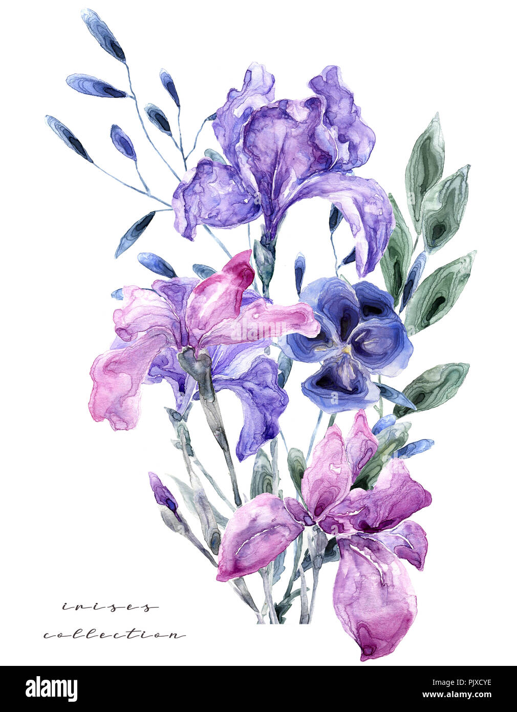 Watercolor Illustration With Iris Painting Freash Flowers On White