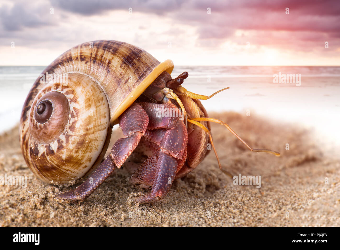 Colorful hermit crab on the beach sand and sea background. - Stock Image