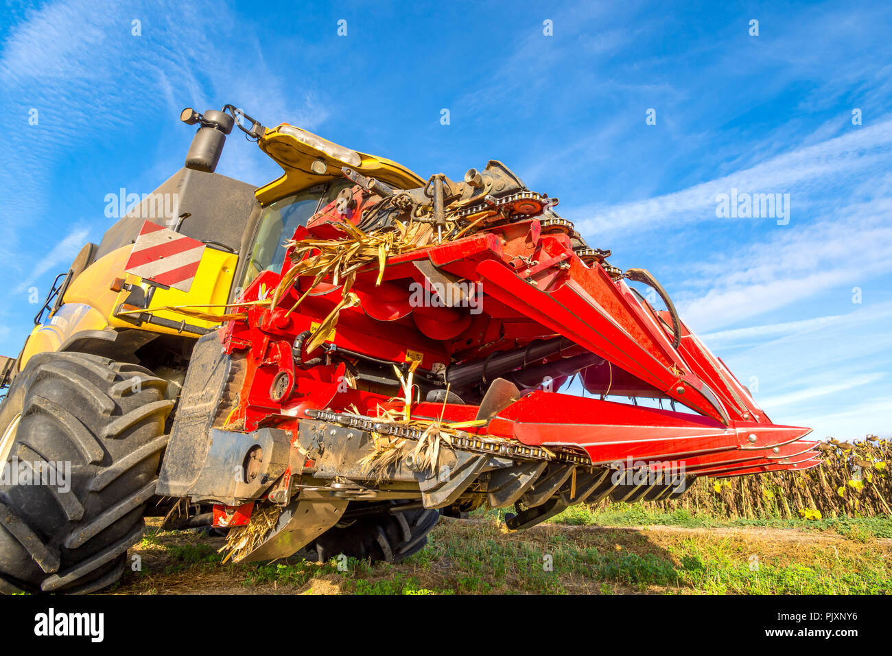 Combine harvester 'corn head cutter' for maize and sunflowers