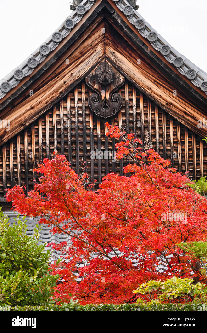 Tofuku-ji zen temple, Kyoto, Japan. The colourful autumn foliage of a maple tree, seen against one of the old temple buildings - Stock Image