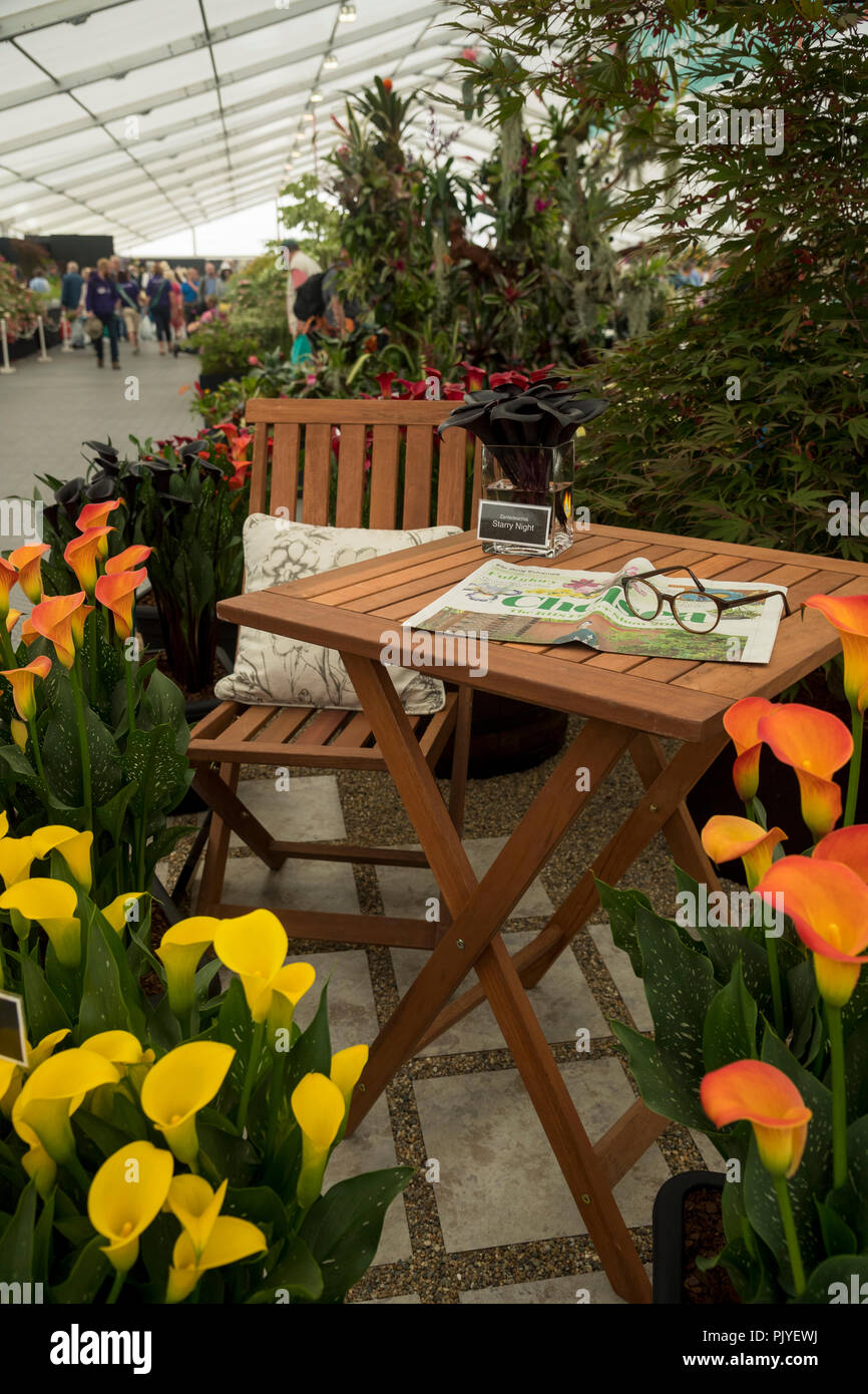 Close-up of staged display with garden table & seat & colourful zantedeschia plants in flower - RHS Chatsworth Flower Show, Derbyshire, England, UK. Stock Photo