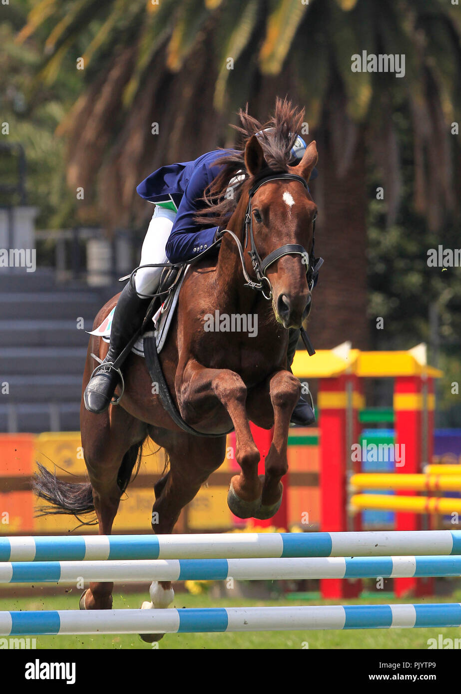 The Guatemalan Charles Fernandez competes in the mixed relay equestrian jump event held in the framework of the Modern Pentathlon World Championship in Mexico City, Mexico, 09 September 2018. EFE/Mario Guzman - Stock Image