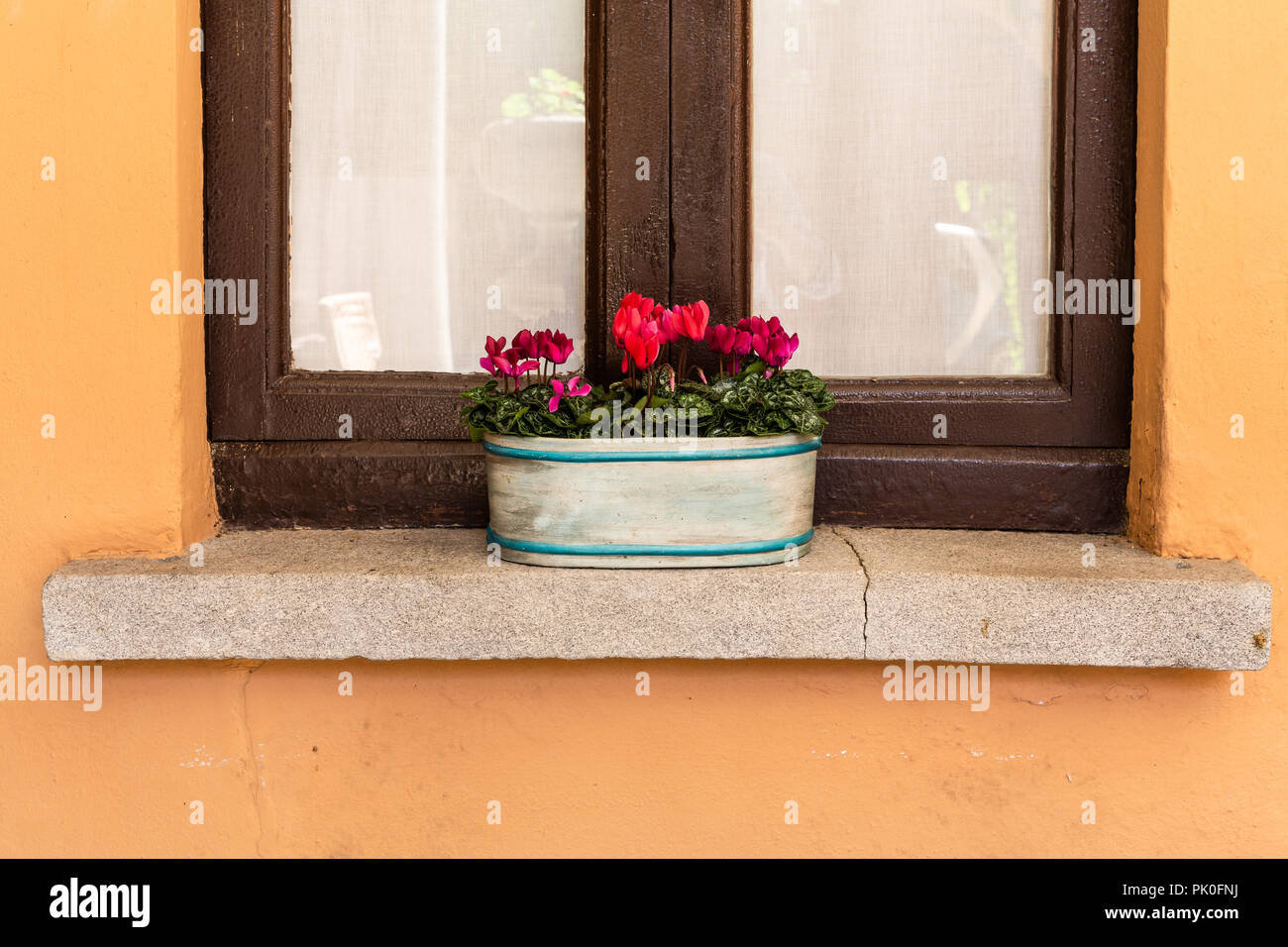 Flowers in plant pots on a windowsill - Stock Image