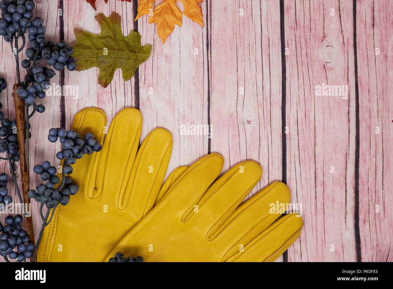 Beautiful fall autumn gardening scene, sunflowers, acorns, leaves and yellow gardening gloves over a pink wood background - Stock Image