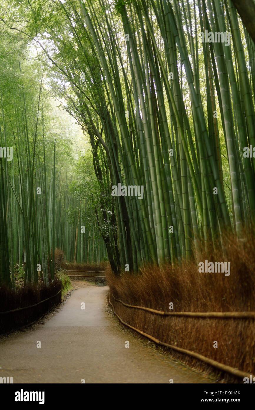 Arashiyama bamboo forest path artistic tranquil scenery in Kyoto, Japan. Stock Photo