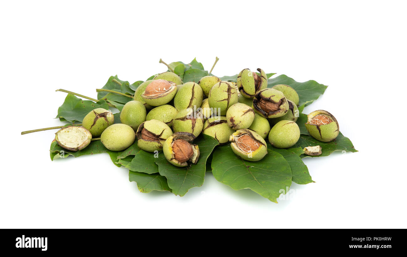 Group of green walnuts scattered on a leaf, on a white background with shadows, composition, at an angle view Stock Photo