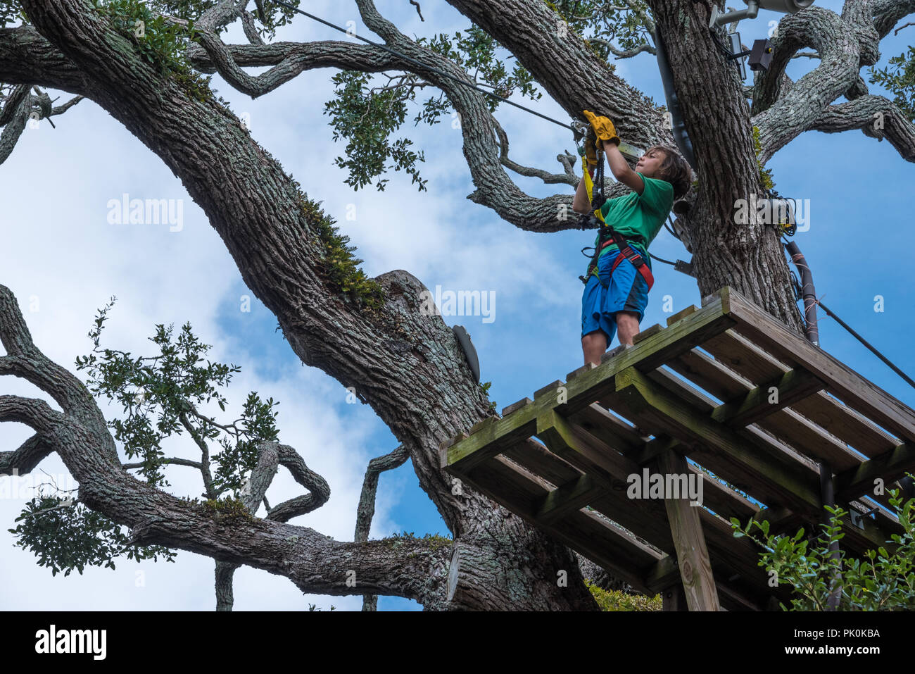 Young boy checking the continuous belay system on a treetop platform at the Crocodile Crossing zip line course above St. Augustine Alligator Farm. - Stock Image