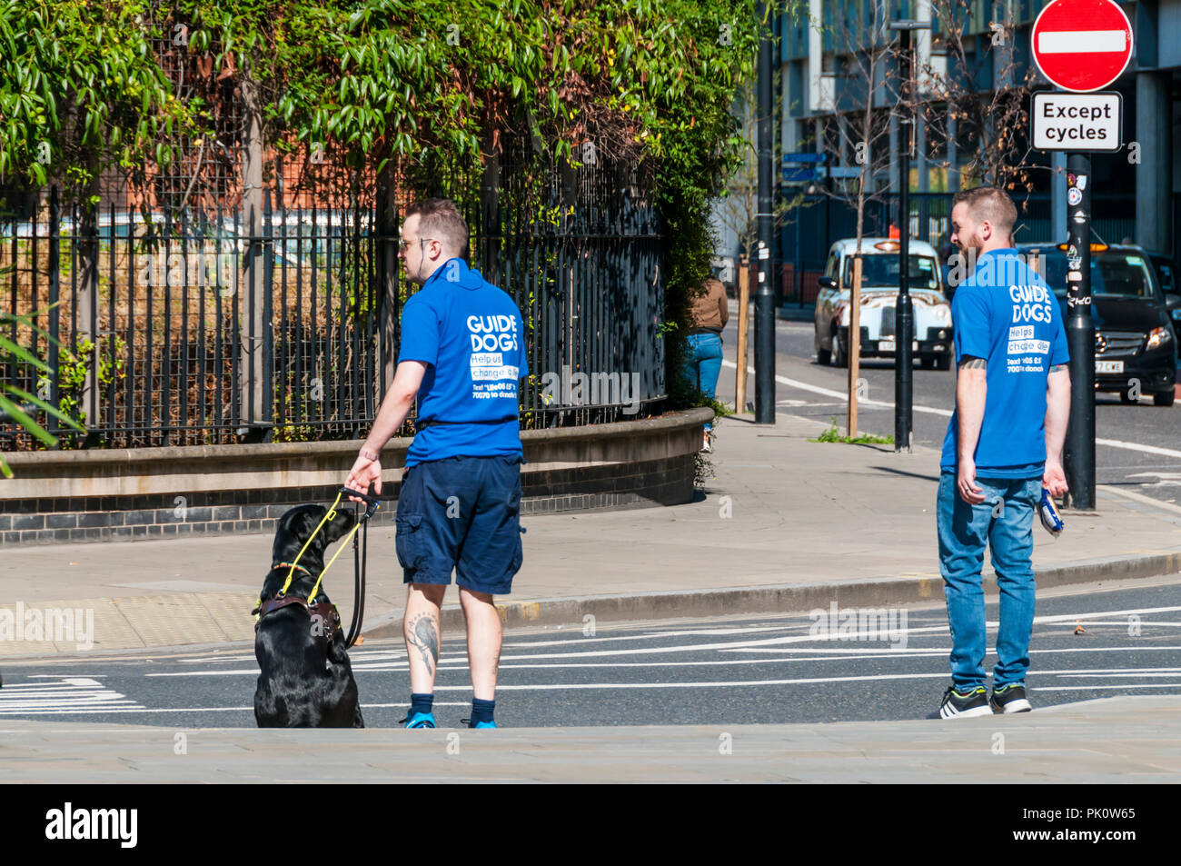 Guide Dogs for the Blind Association guide dog training in central London. - Stock Image