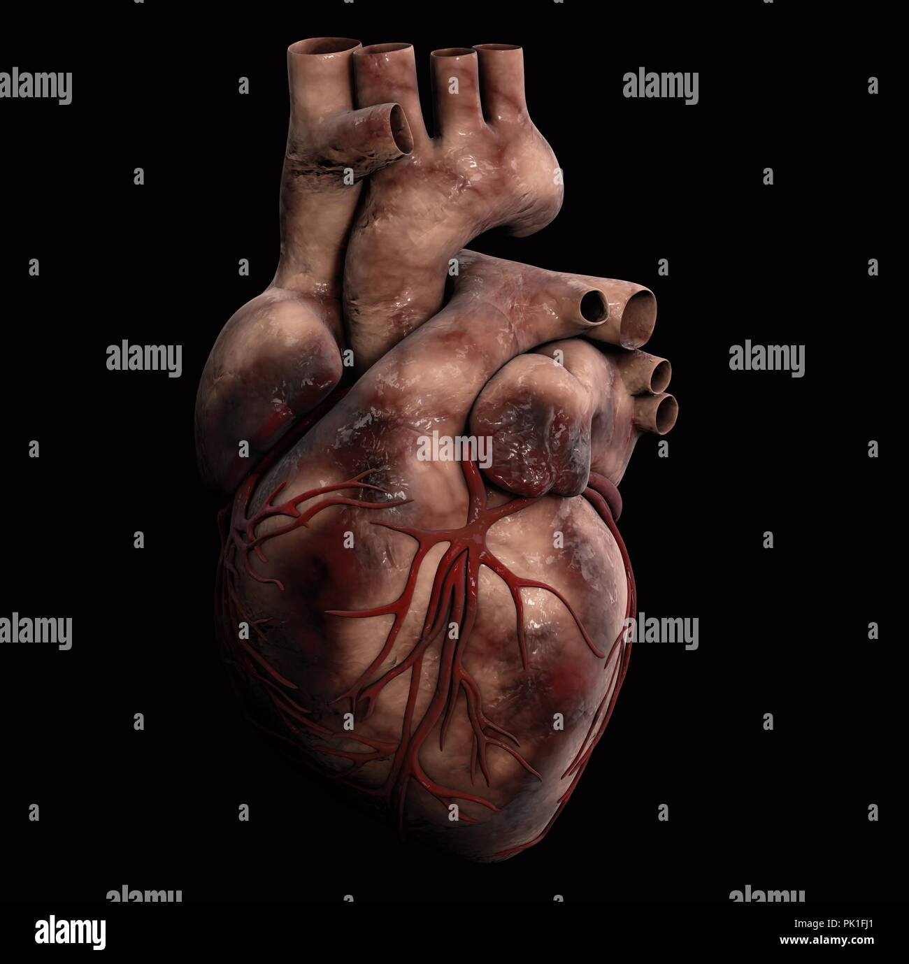 3d Human Body And Heart Anatomy Stock Photos & 3d Human Body And ...