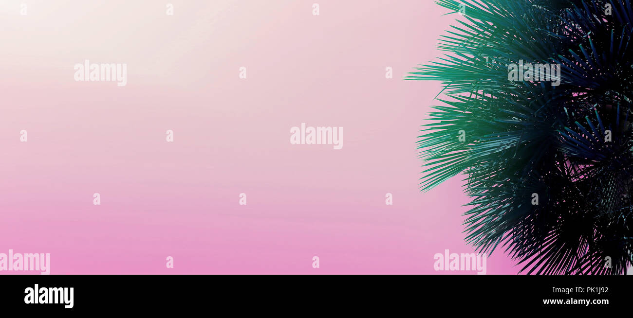 Website heading and banner with copy space in pink color and palm tree. - Stock Image