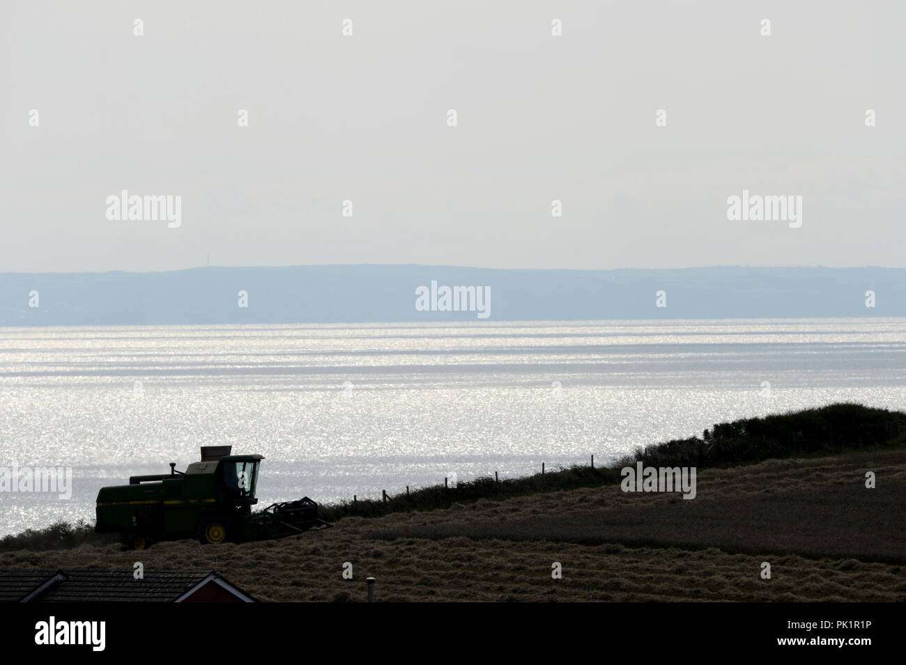 combine harvester in field of wheat with a sparkling sea in the background - Stock Image