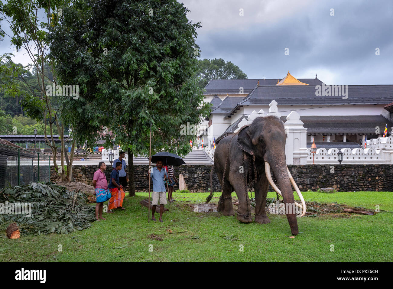 Elephant chained in front of the Temple of the Sacred Tooth Relic, Kandy, Sri Lanka - Stock Image