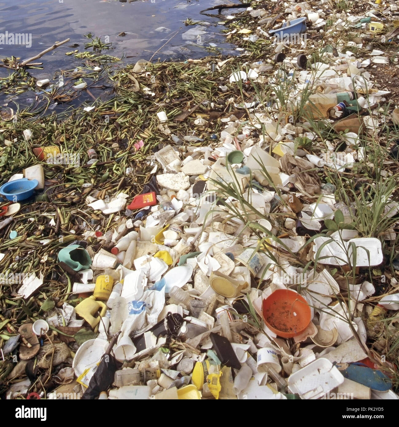 Sea pollution selection of discarded floating plastic packaging waste debris litter garbage junk washed up shoreline Dominican Republic Caribbean Sea - Stock Image