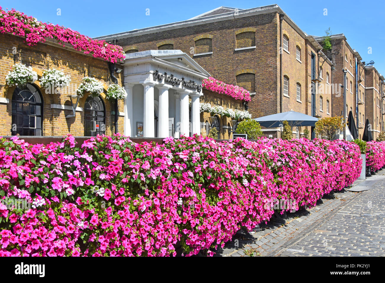 London street scene West India Quay Canary Wharf Petunia flowers at historical Wetherspoons Ledger Building London pub restaurant business England UK - Stock Image
