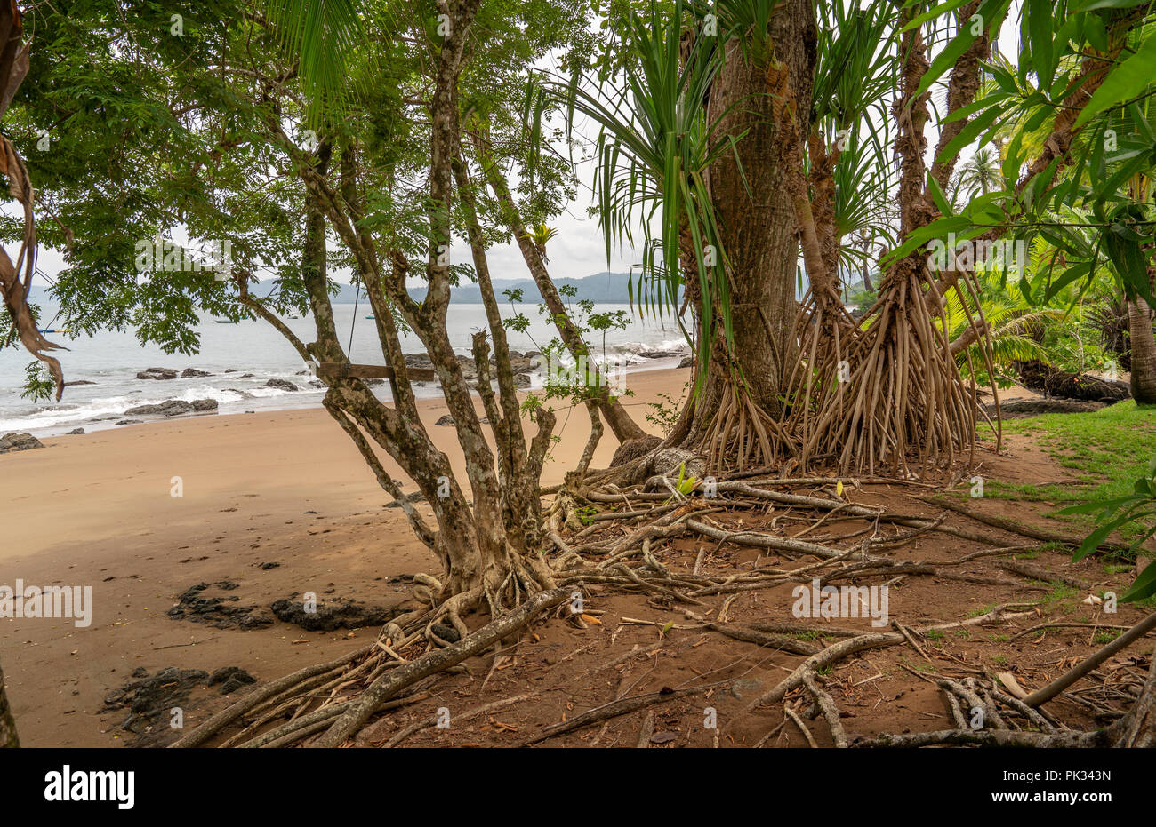 Beach, Corcovado National Park, Osa Peninsula, Costa Rica - Stock Image