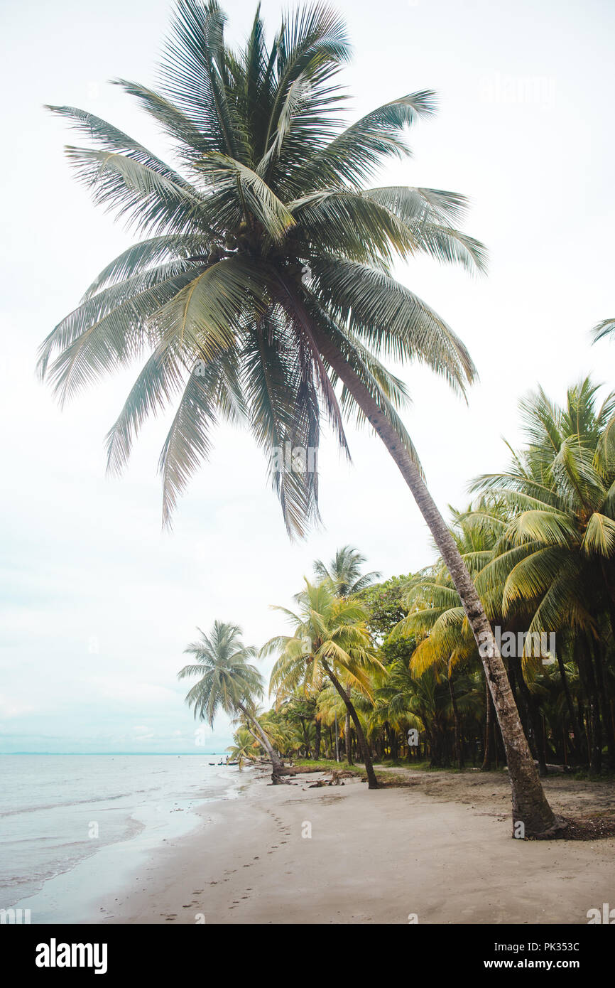Palm trees on a white sand paradise beach on an overcast day in Livingston, east Guatemala - Stock Image