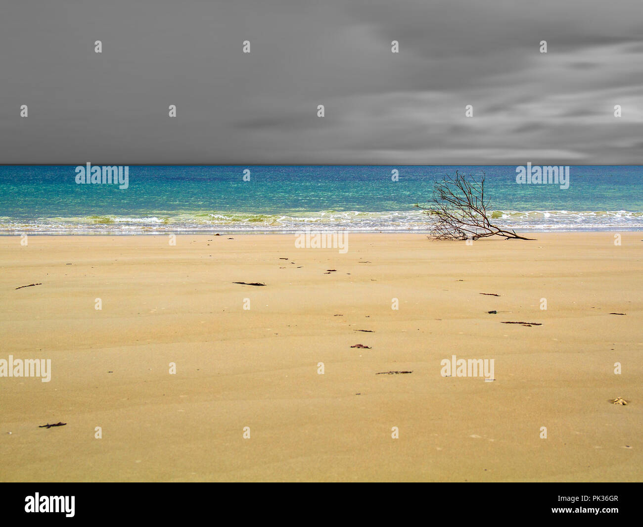 Branch on shore of Myall beach, Cape Tribulation, Australia, Enchanted Landscapes, black-and-white and colour - Stock Image