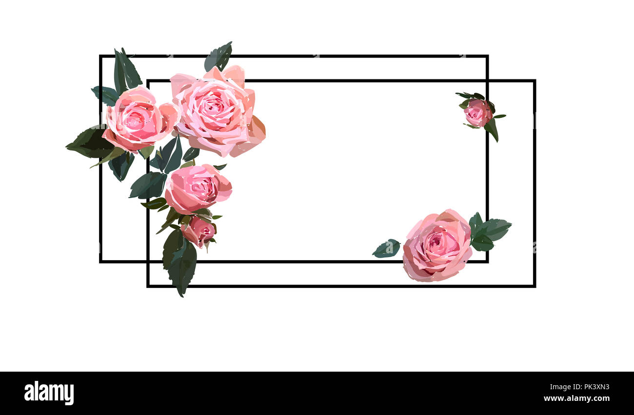 Floral design illustration  Garden flower pink rose isolated