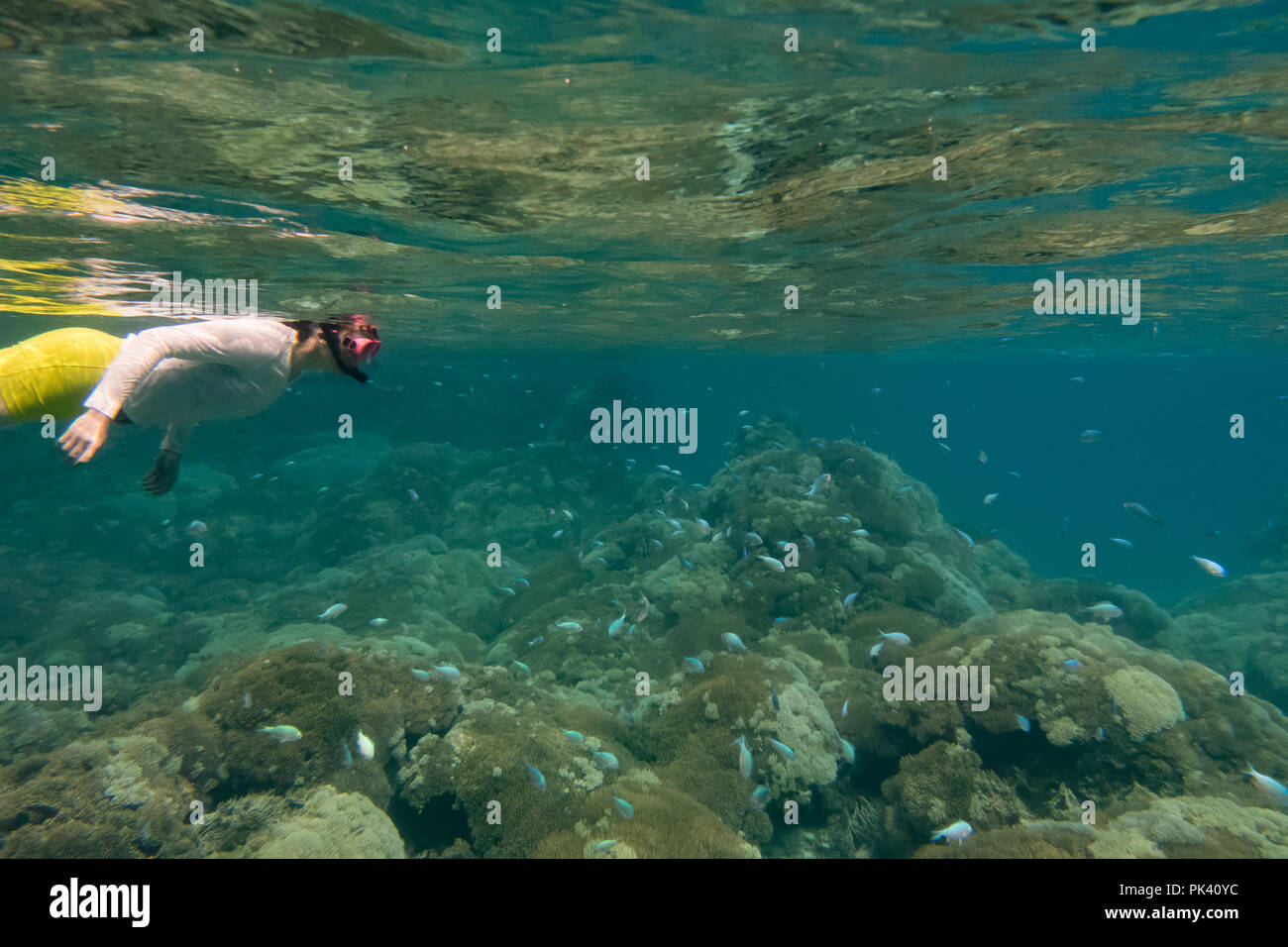 A snorkeler looking at blue damselfish and dead coral due to climate change and coral bleaching at Millennium atoll, Kiribati - Stock Image