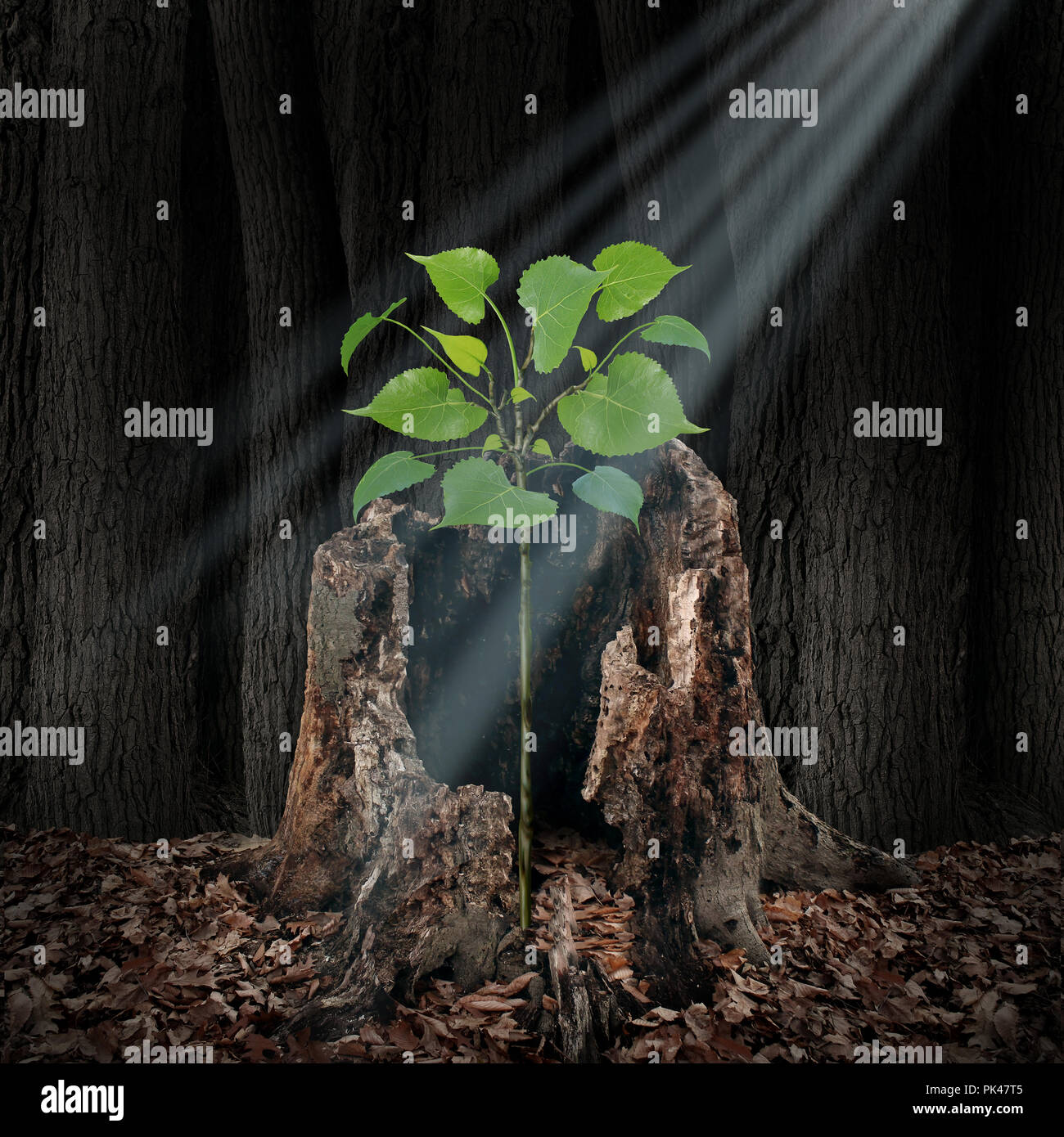 Believe and faith concept as a ray of light shining from above on a sapling growing out of a dead tree as a hope and spirituality idea. - Stock Image