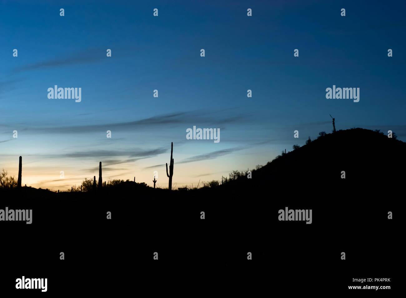 Saguaro Cacti At Night Stock Photos Amp Saguaro Cacti At