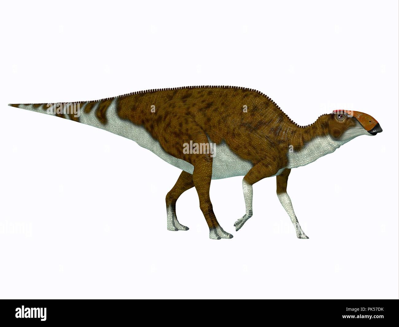 Brachylophosaurus Dinosaur - Brachylophosaurus was a herbivorous Hadrosaur dinosaur that lived during the Cretaceous Period of North America. - Stock Image