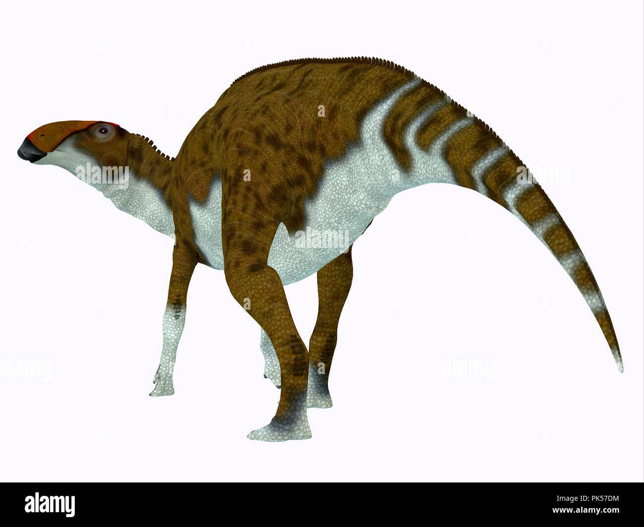 Brachylophosaurus Dinosaur Tail - Brachylophosaurus was a herbivorous Hadrosaur dinosaur that lived during the Cretaceous Period of North America. - Stock Image