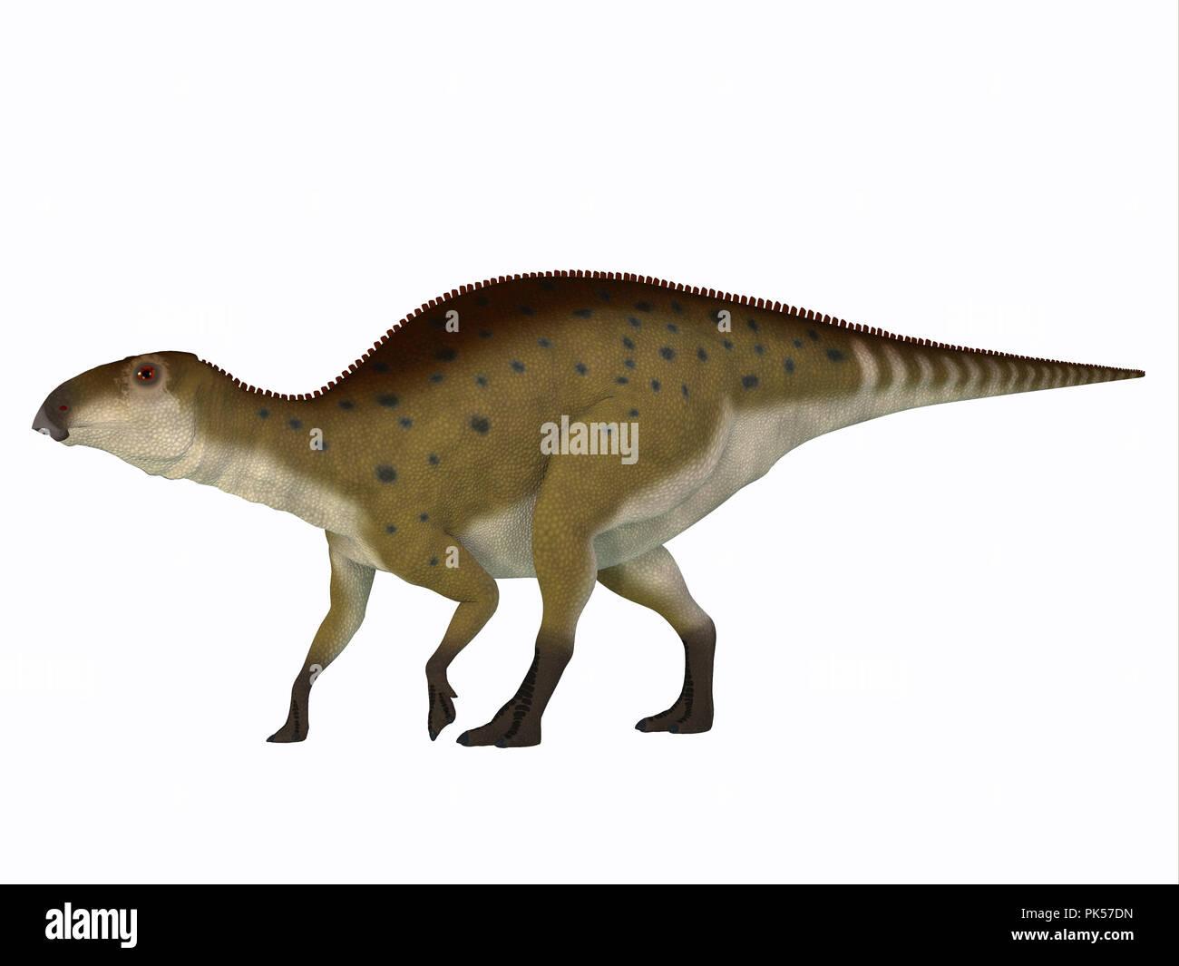 Brachylophosaurus Juvenile Dinosaur - Brachylophosaurus was a herbivorous Hadrosaur dinosaur that lived during the Cretaceous Period of North America. - Stock Image