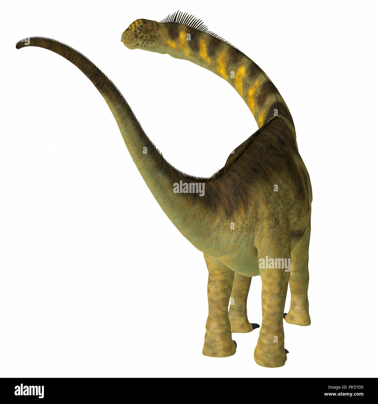 Camarasaurus Dinosaur Tail - Camarasaurus was a herbivorous sauropod dinosaur that lived in North America during the Jurassic Period. - Stock Image