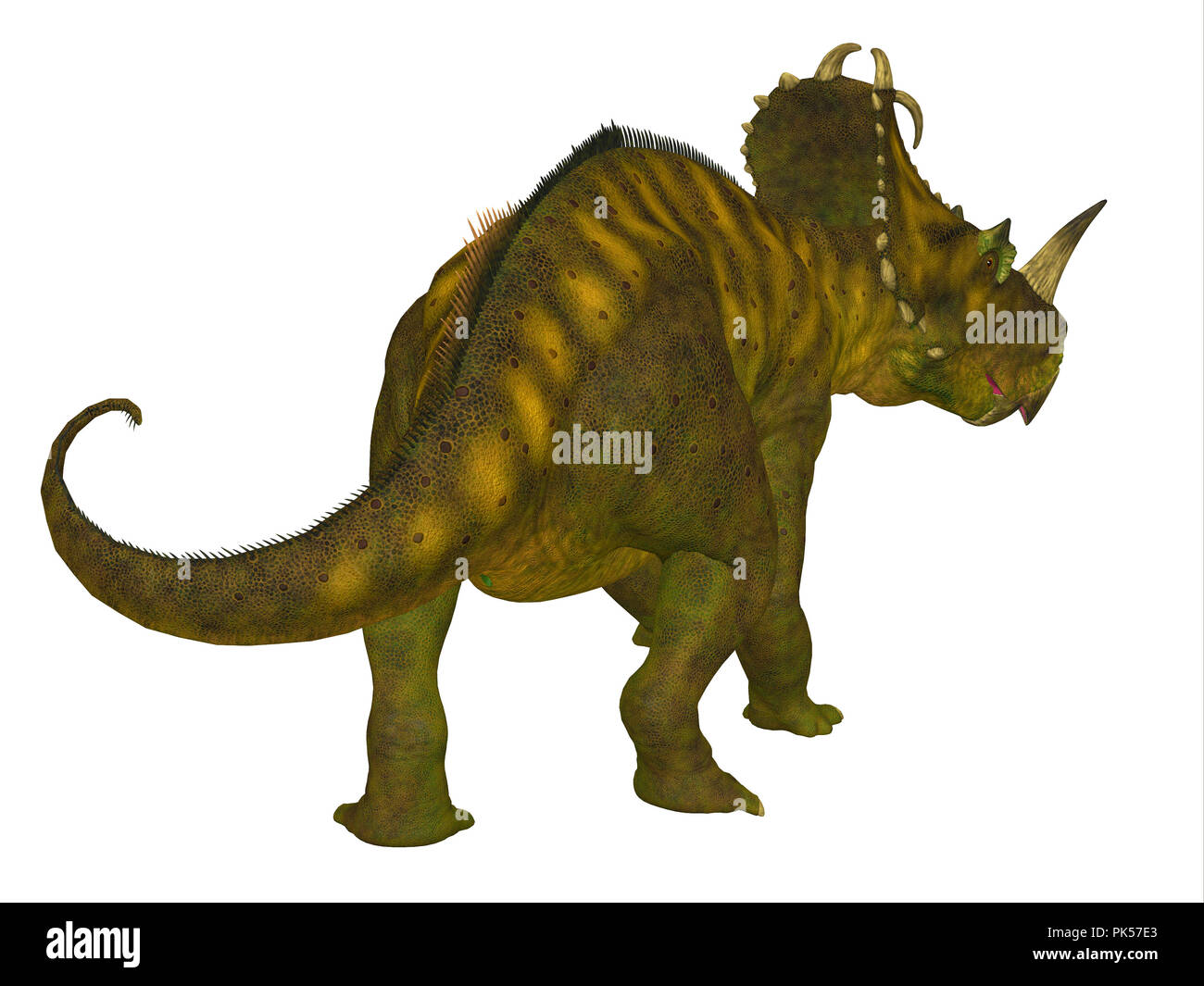 Centrosaurus Dinosaur Tail - Centrosaurus was a beaked ceratopsian herbivorous dinosaur that lived in Canada during the Cretaceous Period. - Stock Image