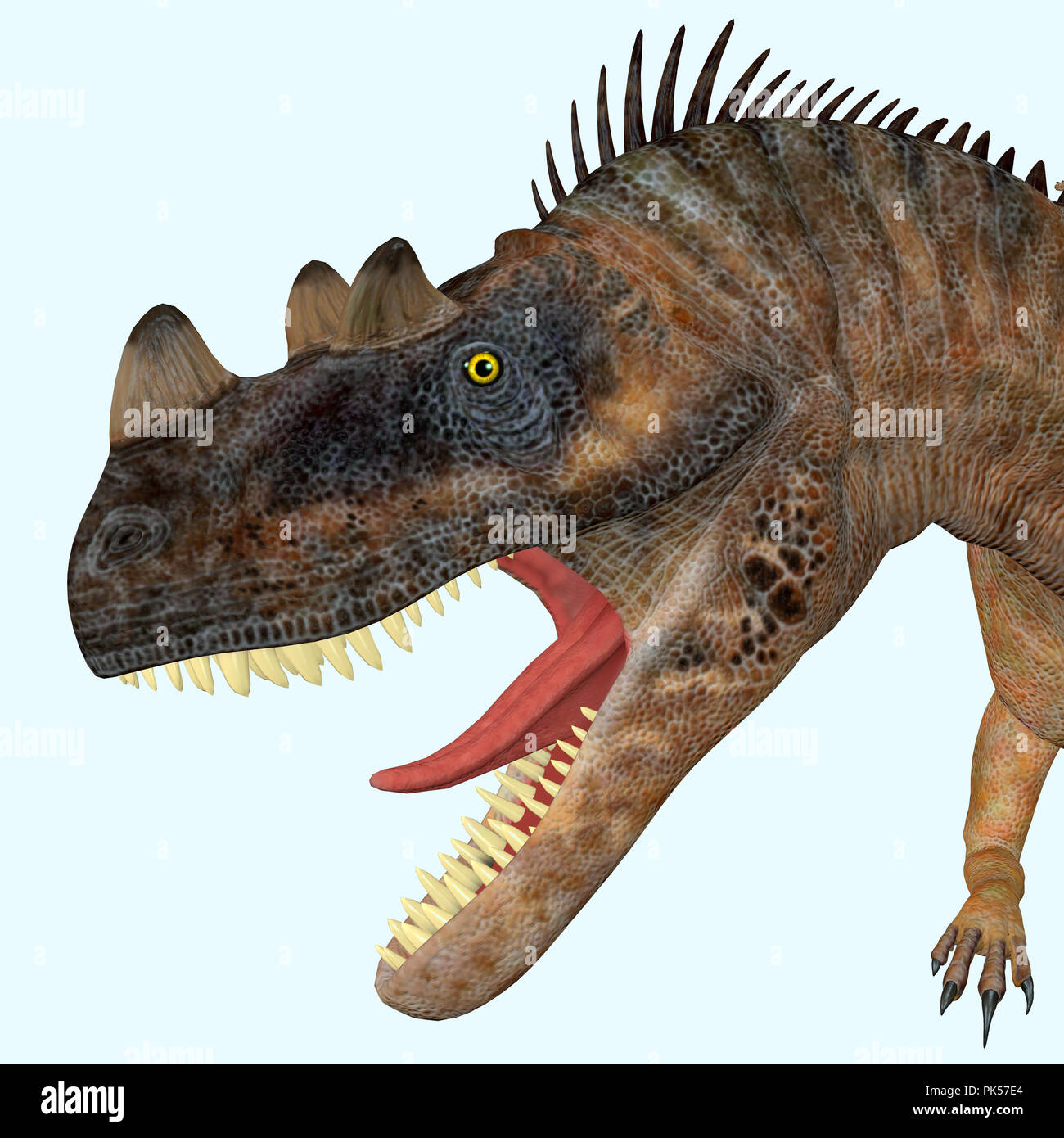 Ceratosaurus Dinosaur Head - Ceratosaurus was a theropod carnivorous dinosaur that lived in North America during the Jurassic period. - Stock Image