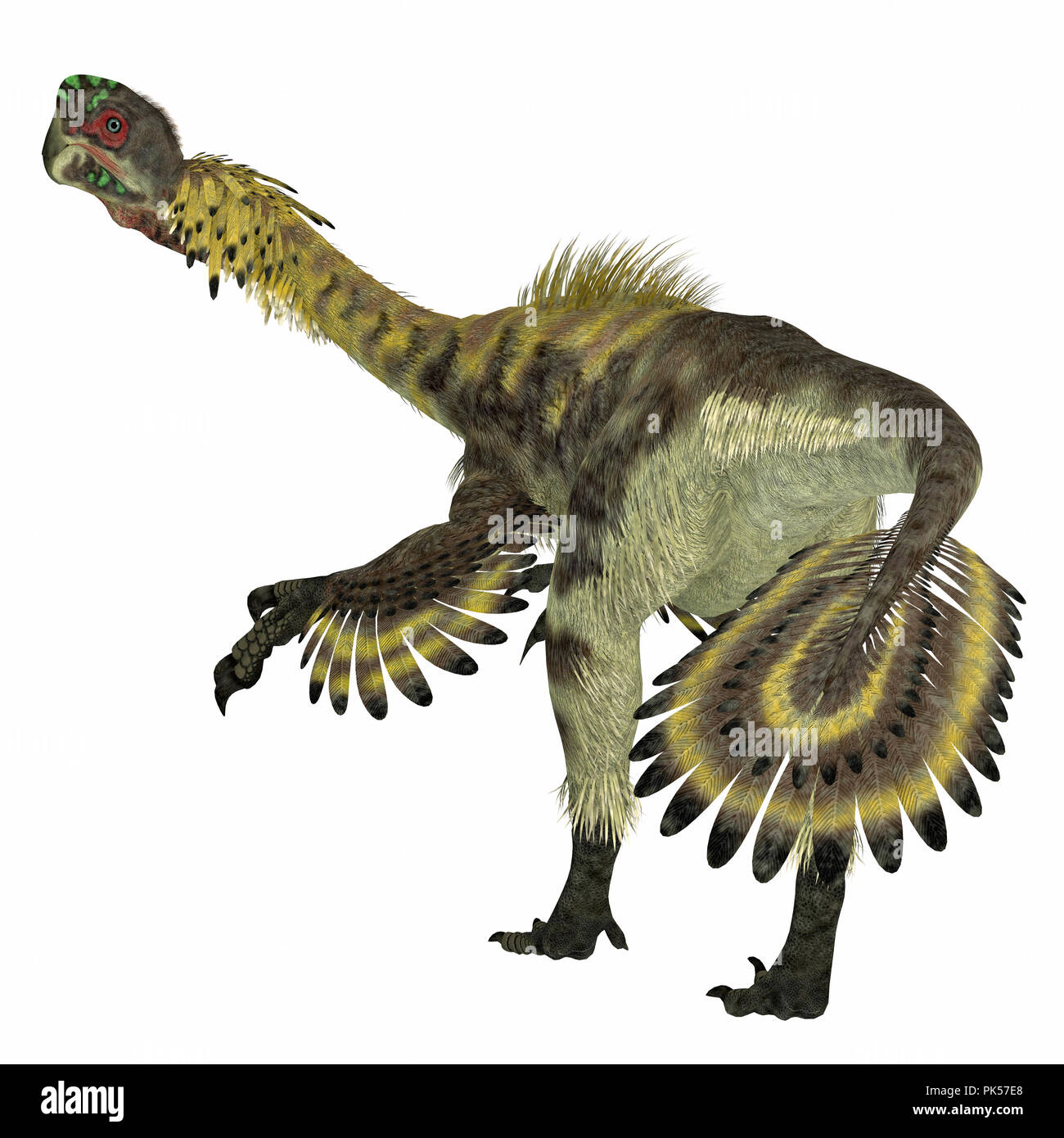 Citipati Dinosaur Tail - Citipati was a carnivorous Velociraptor dinosaur that lived in Mongolia during the Cretaceous Period. - Stock Image