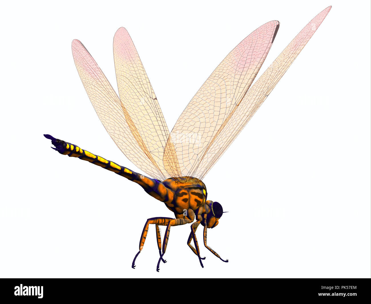 Meganeura Dragonfly - Meganeura was extremely large carnivorous dragonfly insect that lived in France and England during the Carboniferous Period. - Stock Image