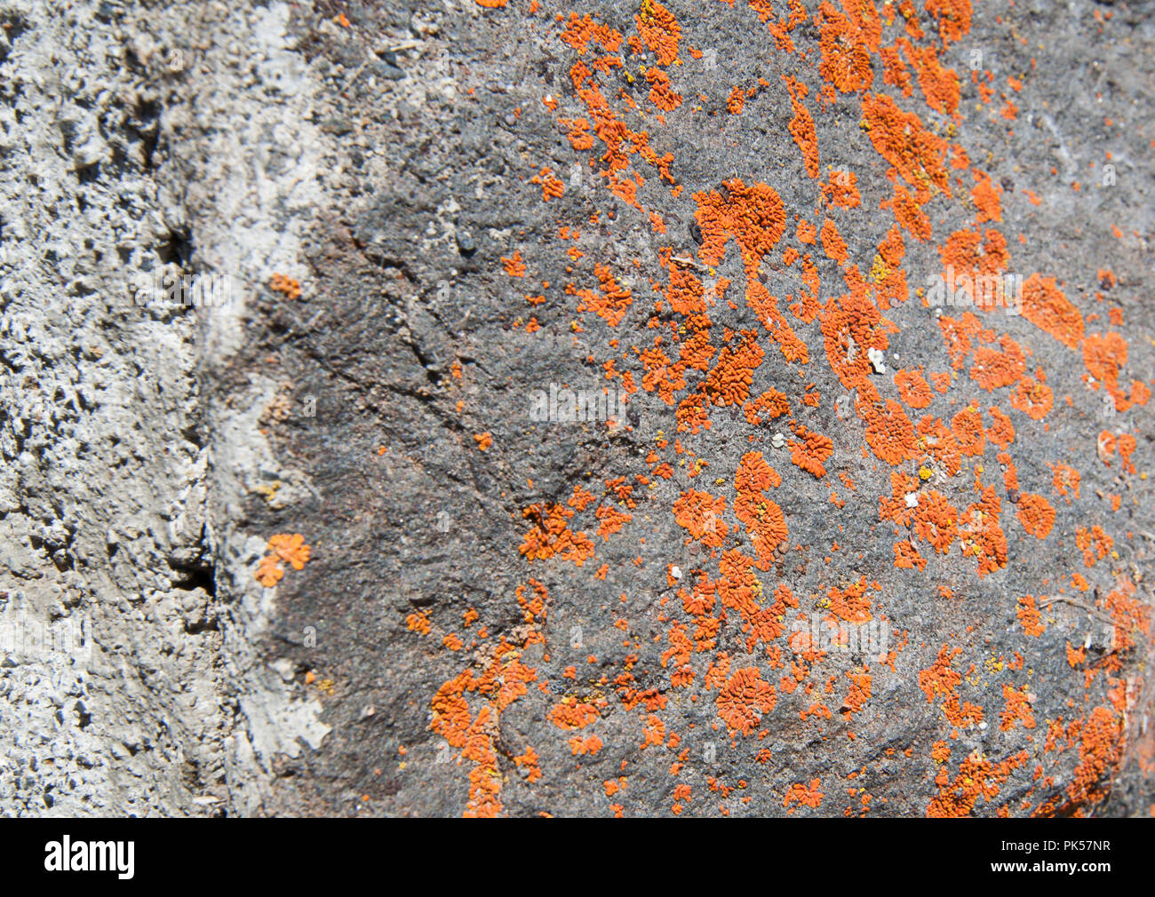 Nature closeup of rocks with deeply colored orange lichen growing.  Cool texture details could be used as a grunge texture as a design element too. - Stock Image