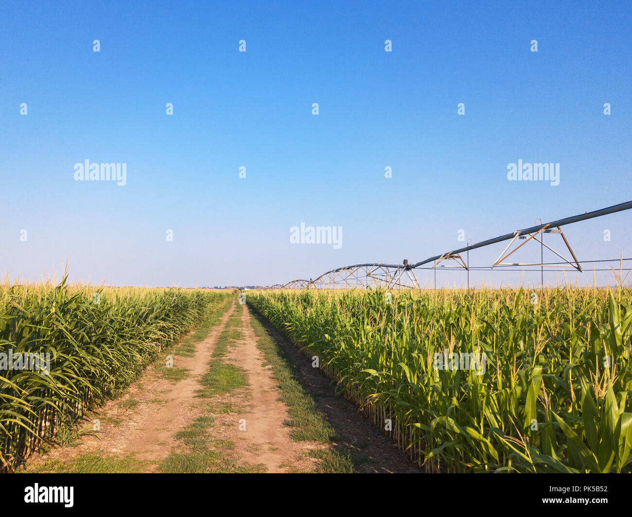 Drone photography, aerial view of water irrigation system in cultivated cornfield - Stock Image