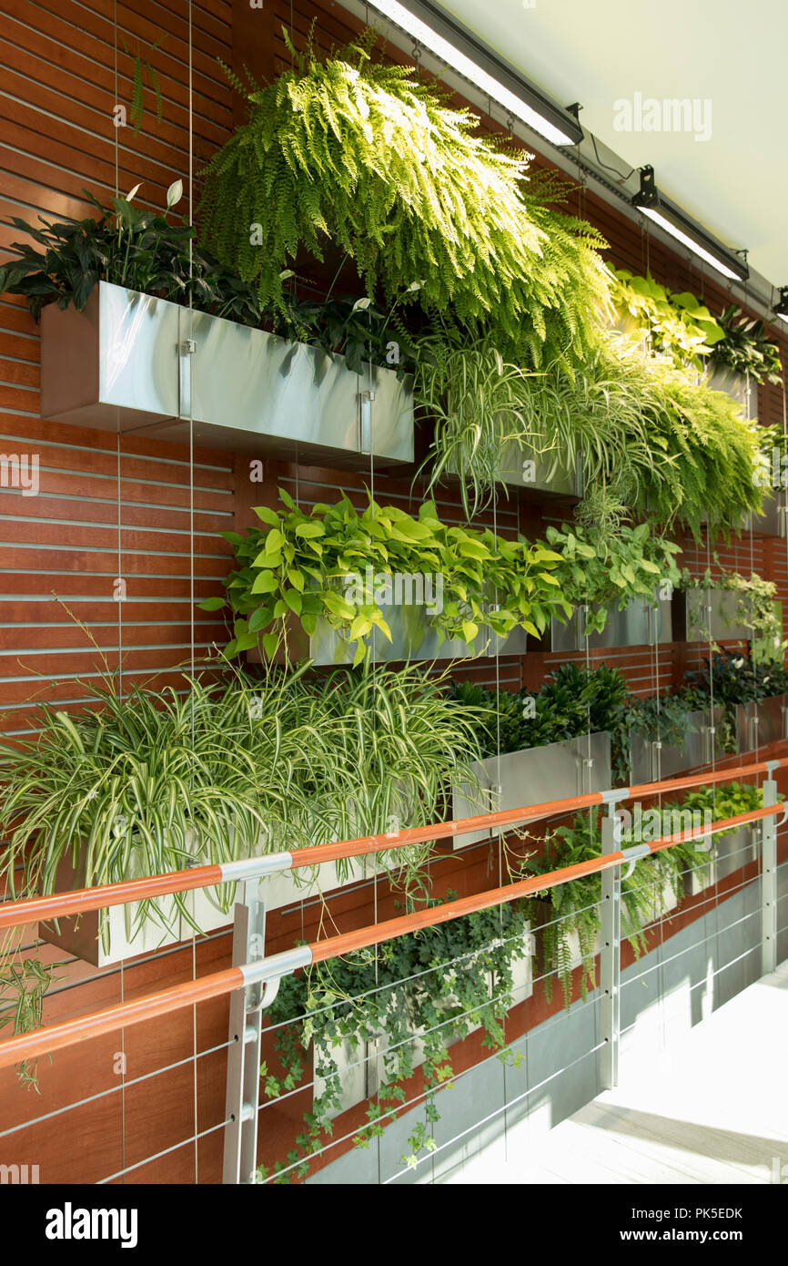 living wall planters - Stock Image