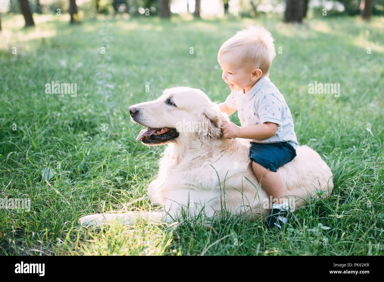 Little child playing with Labrador retriever dog together in wood. - Stock Image