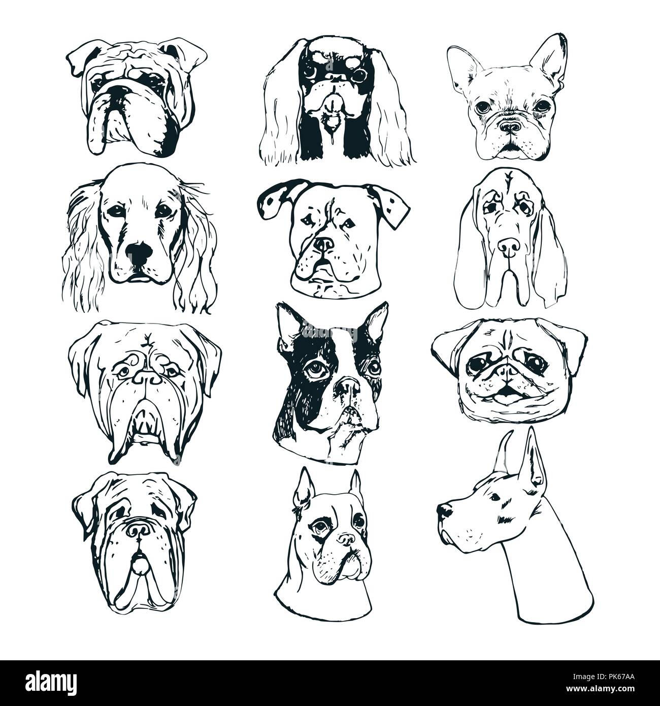 Hand Drawn Dog Portraits On White Background Vector Dog Set